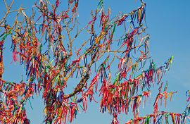 wish-tree-branches-tied-with-colorful-ribbons-stock-photography_csp5755760